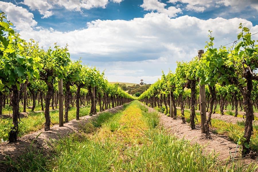 Weinkellerei Meraner Australien Wein