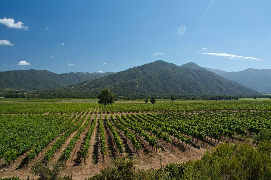 Weinkellerei Meraner Chile Wein